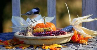 Chickadee Thanksgiving