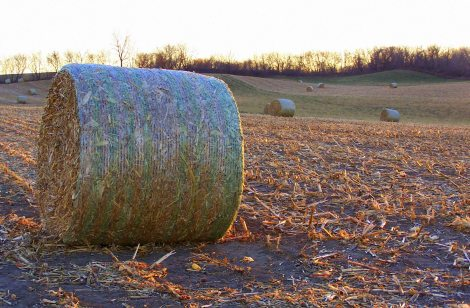 farm field round bale sf