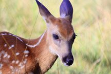 bambi summer