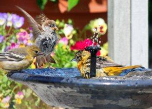 fun in the birdbathsf