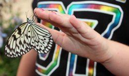 Iowa State Fair butterfly house sf