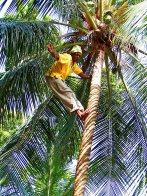 Jamaica sf