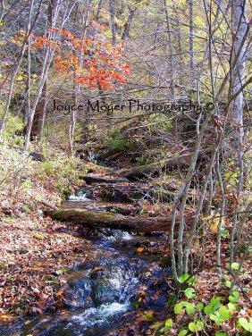 Malanaphy Springs Decorah