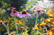 Prairie Flowerssf