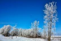 Prairie Farmer Trail- Calmar IAjm
