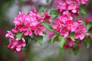 blossomjm