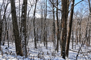 Duttons Cave area in snow by Joyce Meyer