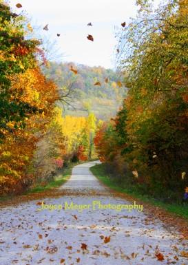 leaves flying in the wind rural EldoradoIMG_4623esc