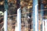 Bluebird migration