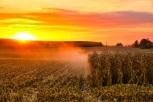 Harvest Havenjm