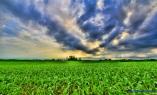 Decorah June clouds & Iowa corn-1