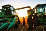 Richard and Jim Elsbernd (standing) harvest corn by Ossian