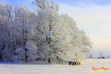 hoar frost by Fort Atkinson with hay bale
