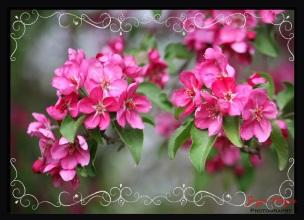 spring swirls border copy