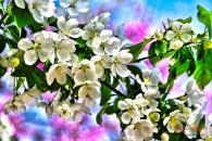 blossomsaci