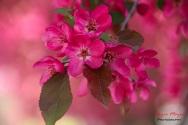 blossomsIMG_9304-1