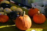 fall market_MG_0096-1