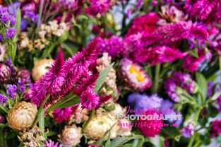 farmers market_MG_0060-1