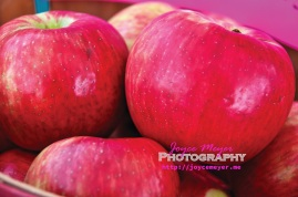 honey crisp and cortland apples are ready for market