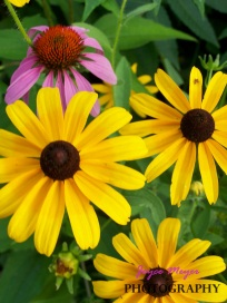 my wildflowers