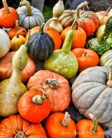 Stacy's fall produce