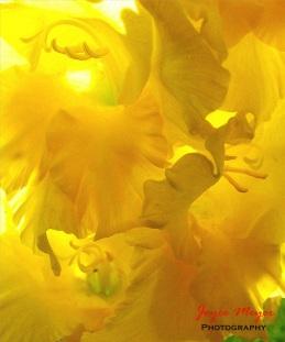Summer Morning Bloom