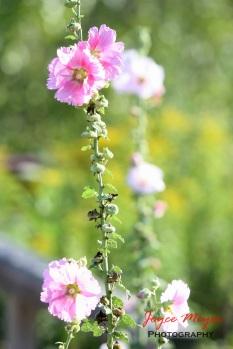 sunlight on flowers
