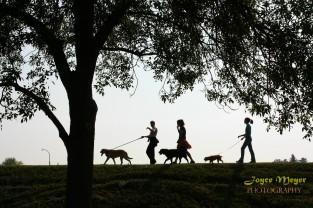 Dog walking on the Dike in DecorahIMG_0356-5