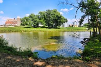 Gordon & Renate Hunter's dog Rex enjoys the farm's swimming hole by Decorah