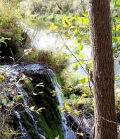 Malanaphy Springs Decorah IA sfjm
