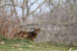 coyoteimg_2925-1-1
